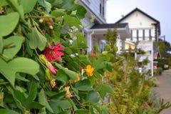 有花的常春藤厂在Mendocino,加利福尼亚 免版税库存照片