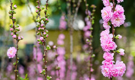 有花的庭院 免版税库存图片