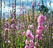 有花的庭院 免版税库存照片