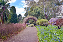 有花的庭院 库存图片