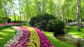 有花的新鲜的草坪 股票录像