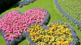 有花的新鲜的草坪 影视素材