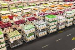 有花的条板箱在一朵荷兰语花拍卖 免版税库存照片