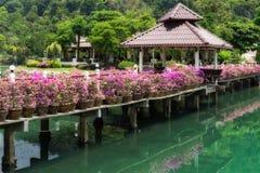 有花的桥梁横跨海湾在一个热带庭院里 库存图片