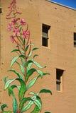 有花的植物墙壁上与窗口在波特兰,俄勒冈 库存照片