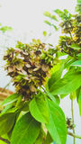 有花的植物 免版税库存图片