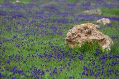 有花的沼地。 库存照片