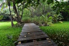 有花的热带百合围拢它的池塘和森林 免版税库存图片