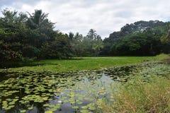 有花的热带百合围拢它的池塘和森林 免版税图库摄影