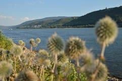 有花的美丽的河莱茵河在巴哈拉附近 免版税图库摄影