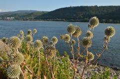 有花的美丽的河莱茵河在巴哈拉附近 库存图片