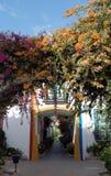 有花的色的房子 库存图片