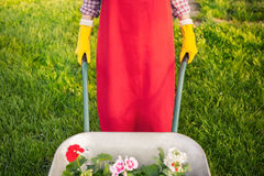 有花的花匠在独轮车 免版税库存照片