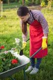 有花的花匠在独轮车 库存图片