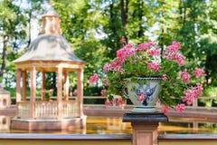 有花的花瓶在夏天庭院里 免版税库存图片