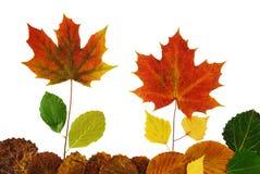 有花的草甸在叶子外面 免版税库存图片