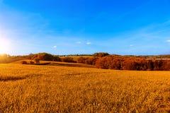 有花的草甸在日落期间 免版税库存照片