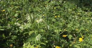 有花的草甸在春天期间 影视素材