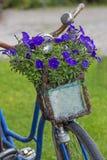 有花的葡萄酒自行车在篮子 免版税库存照片