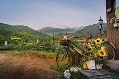 有花的葡萄酒自行车在路边(被定调子的图片)停放 库存图片
