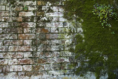 有花的被风化的生苔红色和白色砖墙 库存图片