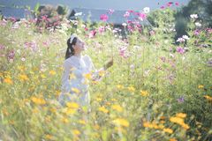 有花的领域的美女 库存照片