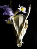 有花的鹿头骨 免版税库存照片