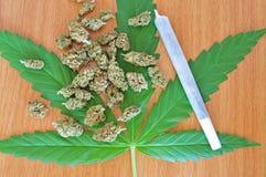有芽和联接的大麻叶子 免版税库存照片