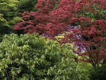 有英亩的日本庭院 免版税库存图片