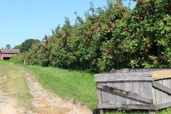 有苹果树、土道路和谷仓的老灰色条板箱在背景中 免版税图库摄影