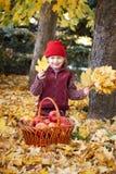 有苹果篮子的女孩在秋天森林摆在,黄色叶子和树在背景 库存图片