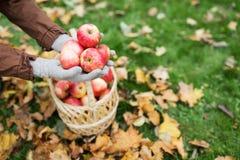 有苹果篮子的妇女在秋天庭院的 库存照片