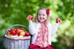 有苹果篮子的小女孩 库存图片