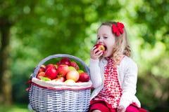 有苹果篮子的小女孩 免版税图库摄影