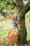 有苹果篮子的小男孩  免版税库存照片