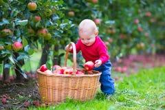 有苹果篮子的小男孩 库存图片