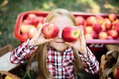 有苹果计算机的女孩在苹果树 吃有机苹果计算机的美丽的女孩在果树园 收获概念 庭院,小孩吃 免版税库存照片