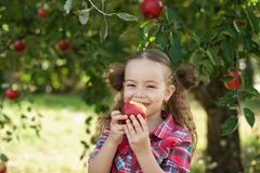 有苹果计算机的女孩在苹果树 免版税库存图片