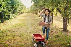 有苹果计算机的女孩在苹果树 库存图片