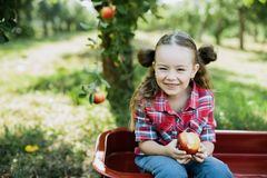 有苹果计算机的女孩在苹果树 免版税库存照片