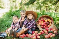 有苹果计算机的孩子在苹果树 吃有机苹果计算机的孩子在果树园 收获概念 庭院,吃果子的小孩 库存照片