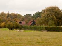 有草原的乡下房子前面和树的 免版税库存图片