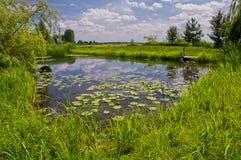 有草和百合丛林的一个美丽如画的池塘  美丽 免版税库存照片