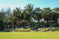 有草和石头的一个棕榈庭院 免版税库存图片