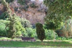 有草坪和树的公园 库存照片