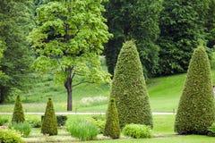 有草坪的春天公园有圆锥形杜松的 免版税库存照片