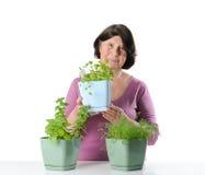 有草本幼木的年长妇女在罐 免版税库存照片
