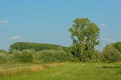 有草甸和树的晴朗的沼泽地在Kalkense Meersen自然reerve,富兰德,比利时的清楚的蓝天下 免版税库存照片