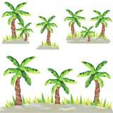 有草的低多棕榈 库存照片