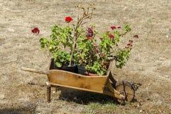 有草的墓地和天竺葵在原始的花盆-木独轮车, Batkun修道院开花 免版税库存图片